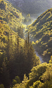 Forested Posters - Rindomo Gorge Poster by Richard Garvey-Williams