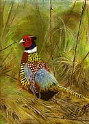 Pheasant Pastels Framed Prints - Ring-Necked Pheasant Framed Print by Karen Cortese