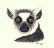 Primate Drawings - Ring Tailed Lemur by Julie L Hoddinott