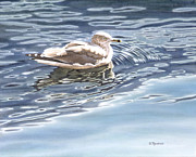 Shimmering Paintings - Ringed Bill Gull by Richard De Wolfe