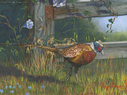 Morning Glory Posters - Ringneck Pheasant Poster by Jeff Brimley