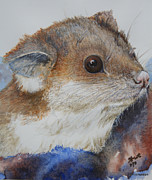 Australian Marsupial Originals - Ringtail Possum in the arms of safety by Jan Lowe