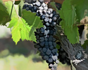 Vineyard Digital Art - Ripe And Ready by Patricia Stalter
