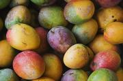 Hawaiian Food Photos - Ripe Mangos by Greg Vaughn - Printscapes