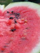 Watermelon Photos - Ripening by Dorin Emanoil Pirvu