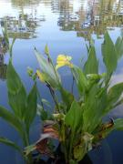 Canna Photo Originals - Rippled Beauty by Warren Thompson