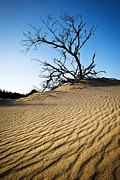 Leading Photos - Rippled Sand Dunes Outer Banks NC - Weathered by Dave Allen