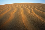 Empty Quarter Posters - Ripples In Sand Poster by Adam Gault