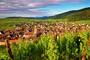 Grape Vineyard Posters - Riquewihr Alsace Poster by Brian Jannsen