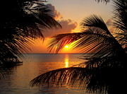 Tropical Sunsets Posters - Rise and Behold Poster by Karen Wiles