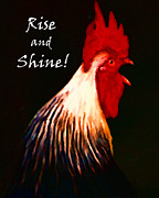 Encouragement Posters - Rise and Shine - Rooster Clucking - Painterly Poster by Wingsdomain Art and Photography