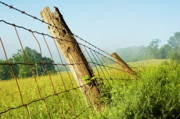 Fence Post Posters - Rising Mist with Falling Fence Poster by Thomas R Fletcher