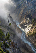 Mists Posters - Rising Mists from Grand Canyon of the Yellowstone Poster by Greg Nyquist