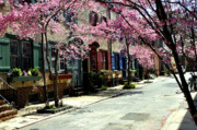 Philadelphia Metal Prints - Rittenhouse Square Neighborhood Metal Print by Andrew Dinh