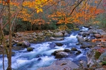 Great Smoky Mountains Prints - River Birch Overhangs Big Creek Print by Alan Lenk
