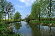 Countryside Originals - River Chelmer by Terence Davis