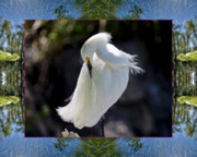 Colorful Photos Framed Prints - River Egret Framed Print by Bell And Todd