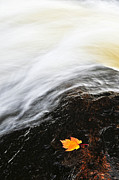 Rushing Posters - River in fall Poster by Elena Elisseeva