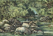 Tasmanian Posters - River In Tasmania, 19th Century Poster by King