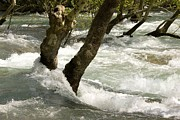 River Flooding Photo Posters - River Manavgat In Flood Poster by Bob Gibbons