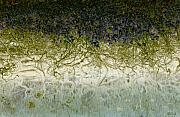 Branches Art - River of Life by Holly Kempe
