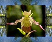 Flower Photos Framed Prints - River Orchid Framed Print by Bell And Todd