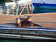 Boats At Dock Posters - River Otters at the Harbor Poster by Pamela Patch