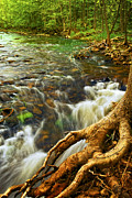 Tree Roots Posters - River rapids Poster by Elena Elisseeva
