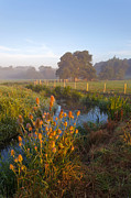 River Mist Photos - River Wey sunrise by Richard Thomas