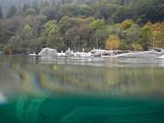 Under Water Photos - River with trees by Mats Silvan