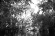 Jaked35mm Prints - River Wooded Print by Jack Norton