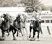 Race Horse Photos - Riverdowns by Sarah Haun