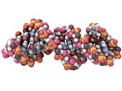 Ribonucleic Acid Metal Prints - Rna-editing Enzyme Combined With Rna Metal Print by Laguna Design