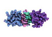 Proteomics Art - Rna-editing Enzyme, Molecular Model by Laguna Design