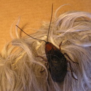 Insects Jewelry - Roach Hair Clip by Roger Swezey