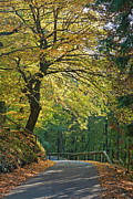 World Changing Prints - Road during autumn Print by Sami Sarkis