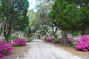 Azalea Bush Photo Prints - Road In Spring Print by Kathy Gibbons