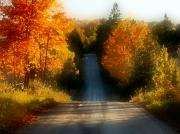 Fall Trees Posters - Road of Colour Poster by David  Hubbs