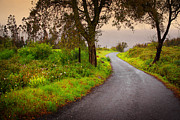 Asphalt Metal Prints - Road on Woods Metal Print by Carlos Caetano