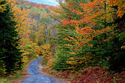 Country Dirt Roads Posters - Road Through Autumn Woods Poster by Larry Landolfi and Photo Researchers