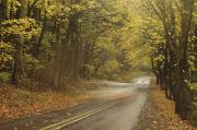 Outdoor Canopy Posters - Road through Forest Poster by Greg Vaughn - Printscapes