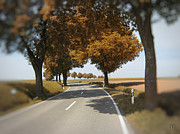 Tree Allee Framed Prints - Road to Bibertal II Framed Print by Nafets Nuarb
