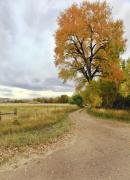 Colorado Greeting Cards Originals - Road To Dads Place by James Steele