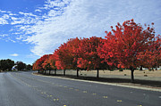 Solano Photo Posters - Road to Fall Colors Poster by Richard Leon