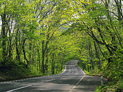 Gatlinburg Tn Prints - Road to Gatlinburg TN Print by Elizabeth Coats