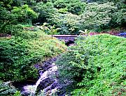 Hana Photos - Road to Hana by Kevin Smith