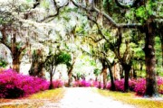 Charlotte Digital Art Posters - Road to St. Bonaventure Poster by Diane Payne