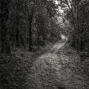 Shine Art - Road Way In Deep Forest by Setsiri Silapasuwanchai