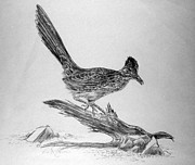 E Black Drawings Prints - Roadrunner Print by Roy Kaelin
