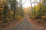 Catherine White Photo Prints - Roads Less Traveled Print by Catherine Reusch  Daley